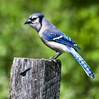 Pixwords The image with bird, tree, trunk, blue Wendy Slocum - Dreamstime