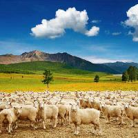 Pixwords The image with sheep, sheeps, nature, mountain, sky, cloud, herd Dmitry Pichugin - Dreamstime