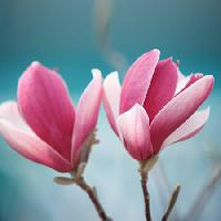 Pixwords The image with flower, pink Sofiaworld - Dreamstime